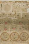 Fécondation. 1-13 Echinodermes (Toxopneustes). A-C Nématodes (Ascaris)