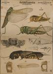 Arthropoda. Jnsecta. Orthoptera. II