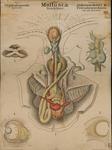 Mollusca. Cephalopoda.  Dibranchiata & Tetrabranchiata