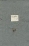 Gnaphalium alpinum nanum
