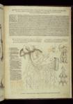 Tabulae anatomicae sex. (Imprimebat Venetijs : B. Vitalis Venetus : sumptibus Ioannis Stephani Calcarensis : prostrant uero in officina D. Bernardi, 1538)