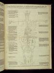 [3]: Arteria magna aorte haorti ex sinistro cordis sinu oriens, et uitalem spiritum toti corpori deferens, naturalemque calorem per contractionem et dilatationem temperans.