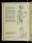 [4]: Lateralis Skeletou figurae designatio