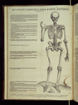[5]: Humani corporis ossa parte anteriori expressa.