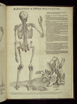 [6]: Skeleton a tergo delineatum.