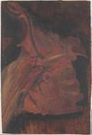 La clavicola segna il confine fra il collo e il torace
