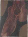 Piccola pelvi. Regioni inguino-femorale e antero-mediale della coscia destra