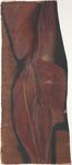 Superficie posteriore dell'arto inferiore