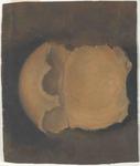 Osso occipitale e ossa parietali