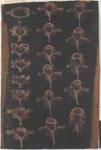 Serie di vertebre cervicali e dorsali