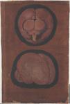 Encefalo non umano osservato dalla superficie superiore