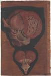 Encefalo nei suoi rapporti con la base cranica