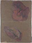 Organi della cavità addominale