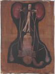 Organi degli apparati urinario e genitale maschile con arterie competenti. [Immagine non del tutto corretta dal punto di vista anatomico]