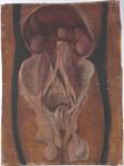 Fegato, organi della cavità peritoneale e dell'apparato genitale maschile