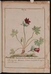 Tavole di botanica
