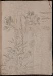 Tavole botaniche