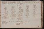 Sapientissimo plantarum conditori cuius aeterni nominis gloriam…