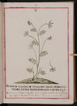 Ferrum equinum vulgaris