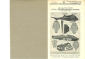 K. A. v. Zittel's Palaeontologische Wandtafeln. Erklärungen zu den  Palaeontologische Wandtafeln