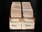 Schedario originale dell'Iconoteca dei botanici