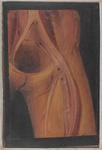 Vasi della pelvi e della coscia