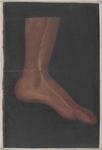 Vena marginale mediale del dorso del piede