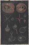 Bulbo oculare e strutture pertinenti ad esso