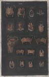 Scheletro della laringe, organo della fonazione appartenente alle vie respiratorie