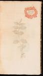 Achyranthus. Amaranthus siculus spicatus