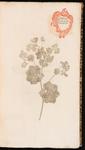 Alchemilla. Alchimilla vulgaris et officinarum