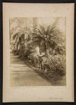 Viale di Palme e Cycas