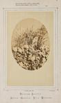 Triticum Sativum Secale Cereale. Vitis Vinifera