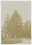 L' Orto botanico di Padova tra il 1895 e il 1900