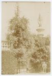 Orto botanico di Padova nel 190?. Bignonia di Goethe