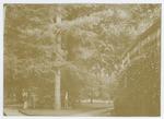 Orto botanico di Padova nel 190?