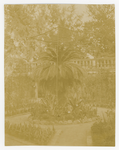 Orto botanico di Padova, 1906