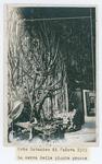 Orto botanico di Padova nel 1929. la serra delle piante grasse