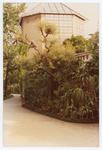 Veduta con serra della palma di Goethe. Orto botanico di Padova