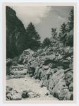 Juliana. Orto botanico alpino A. Bois de Chesne Trieste