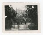Orto botanico di Padova, 194?