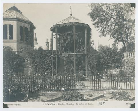 Padova, Giardino botanico, la palma di Goethe - PHAIDRA ...