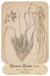 Posidonia caulini Koning