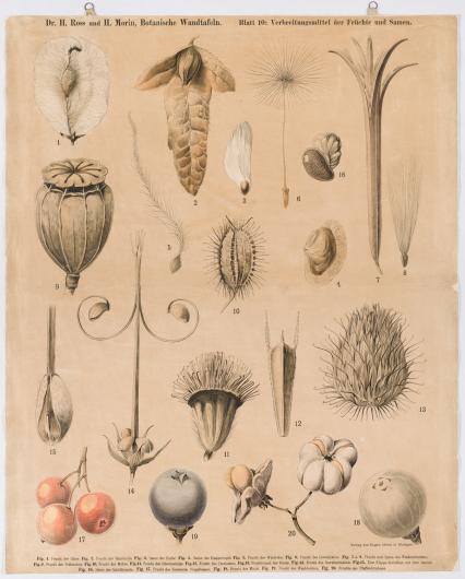Verbreitungsmittel der Früchte und Samen