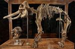 Fossile - Scheletro; composito