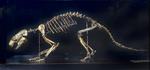 Fossile - Scheletro completo montato