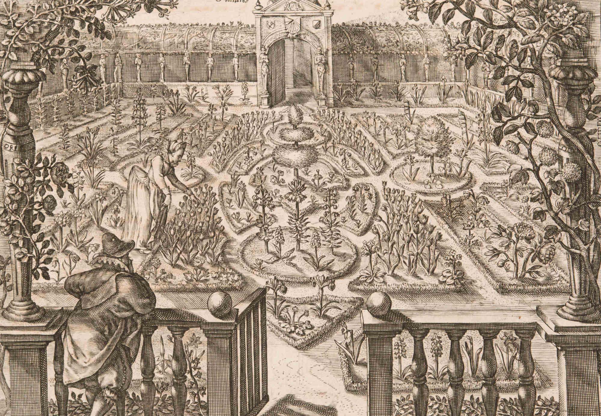 Illustration from Hortus floridus in quo rariorum & minus vulgarium icones ad vivam veramque formam accuratissime delineatae (detail)