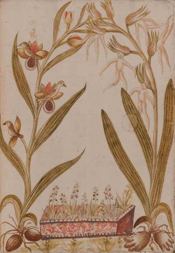 Immagine tratta da Delle Orchidi