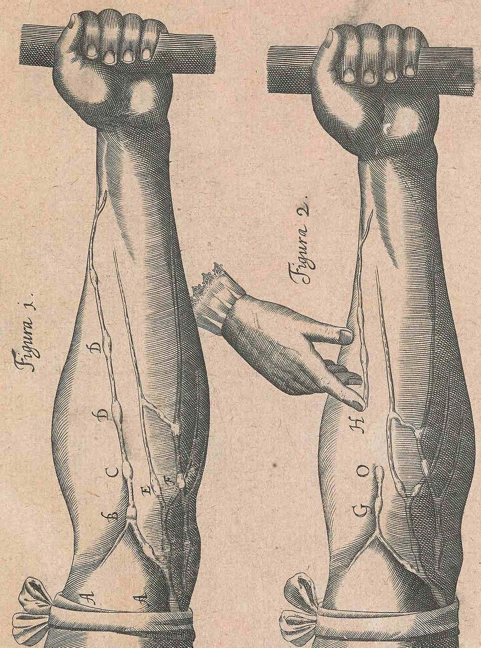 A page from Exercitatio anatomica de motu cordis et sanguinis in animalibus